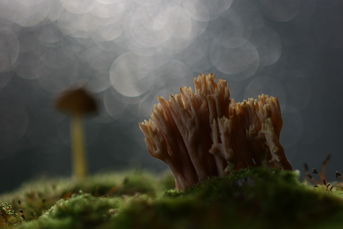 Photograph Mushrooms and mosses by Vadim Trunov on 500px