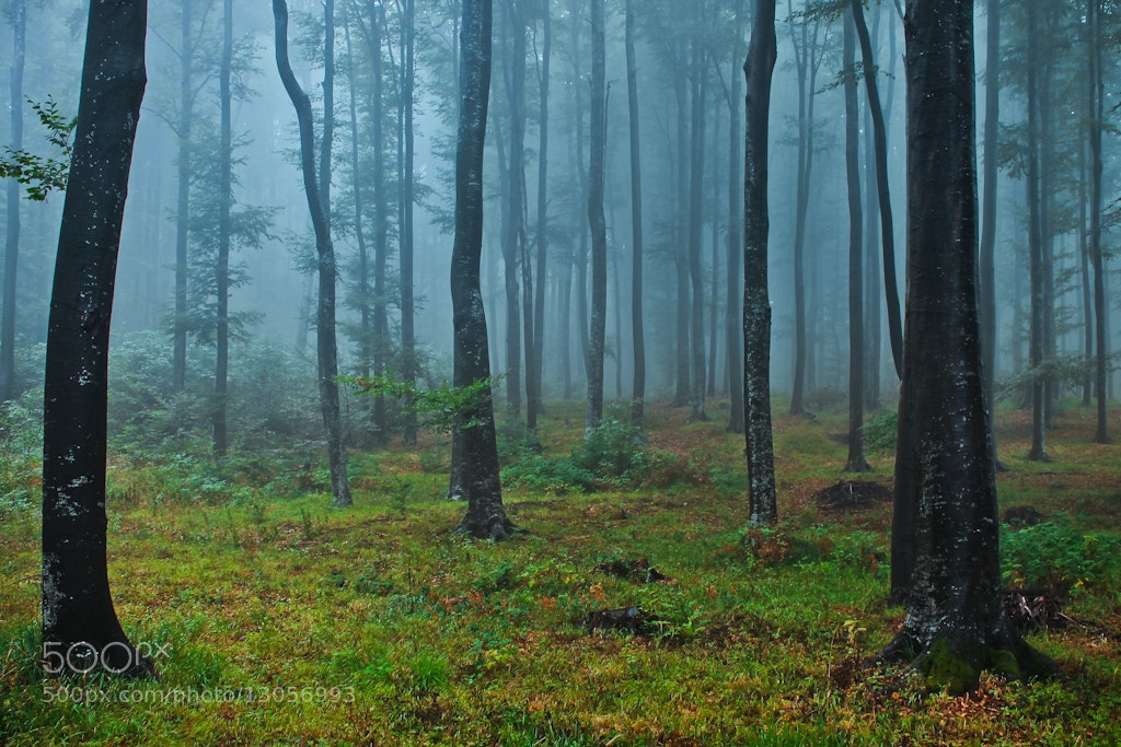 Photograph Forest Of Talking Trees by Jasna Bužimkić on 500px