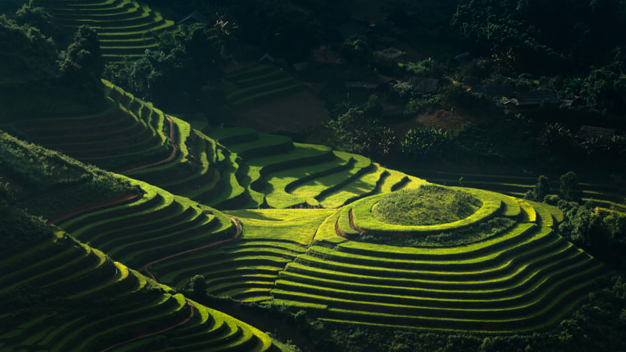 Rice terrace in Vietnam by Nattapon Sritrairat on 500px.com