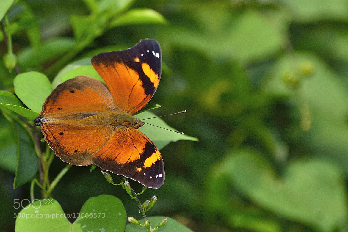 Photograph wide wings by Rachmad Aryw on 500px