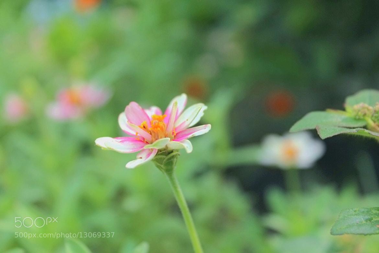 Photograph Flora by Shaima Al-Shaibani on 500px