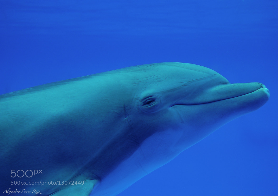 Photograph Delfin  by Alejandro  Ferrer Ruiz  on 500px