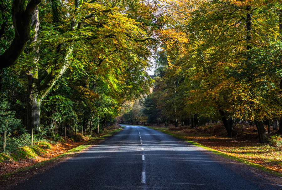 New Forest by Emil Qazi on 500px.com
