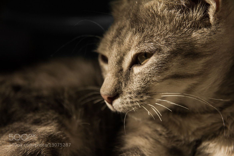 Photograph The Cat by Milenko Jovanović on 500px