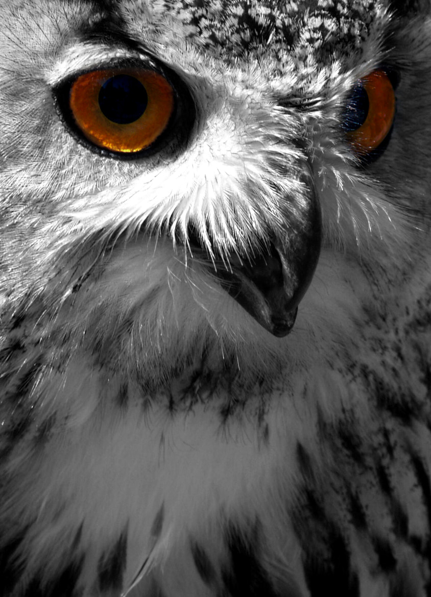 Photograph The Owl by Manolo Toledo on 500px