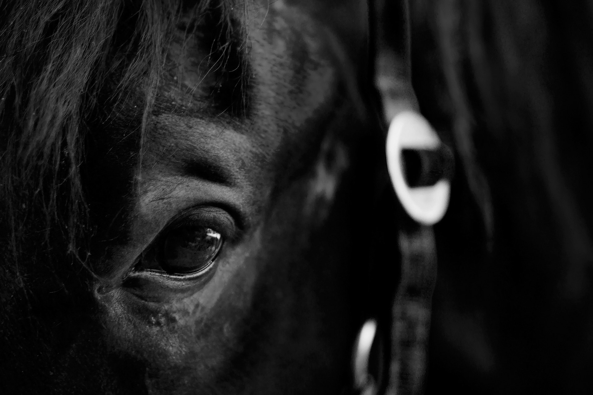 Photograph Horse by Łukasz Auguściak on 500px