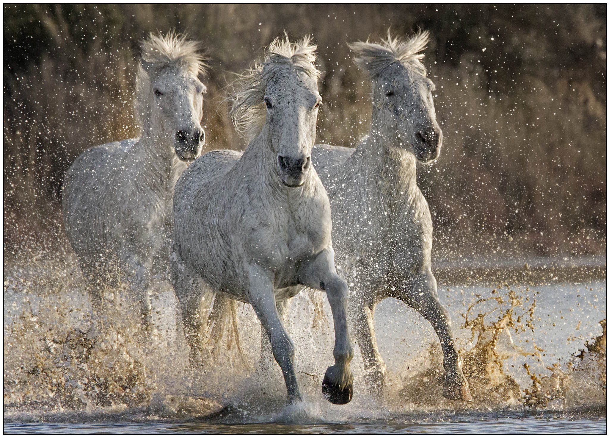 Photograph Charging through the Camargue by James Boardman-Woodend on 500px