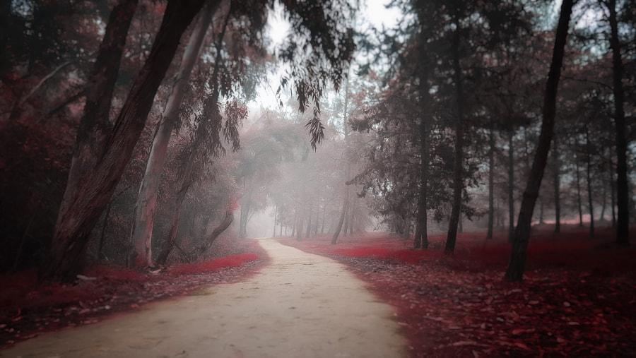 Misty Red by Pavlos Pavlou on 500px.com