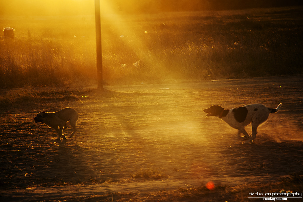 Photograph chase by riza kayan on 500px