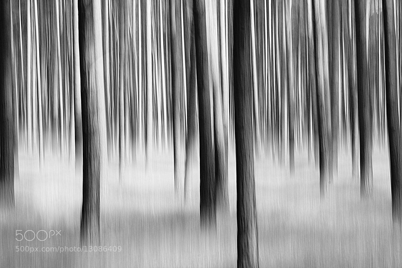 Photograph silent walk by Michaela Wendland on 500px