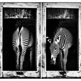 in/out by andrea bovio (andrbov)) on 500px.com