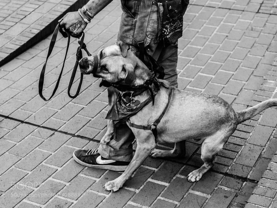 Photograph Short Leash by Eric Leeper on 500px