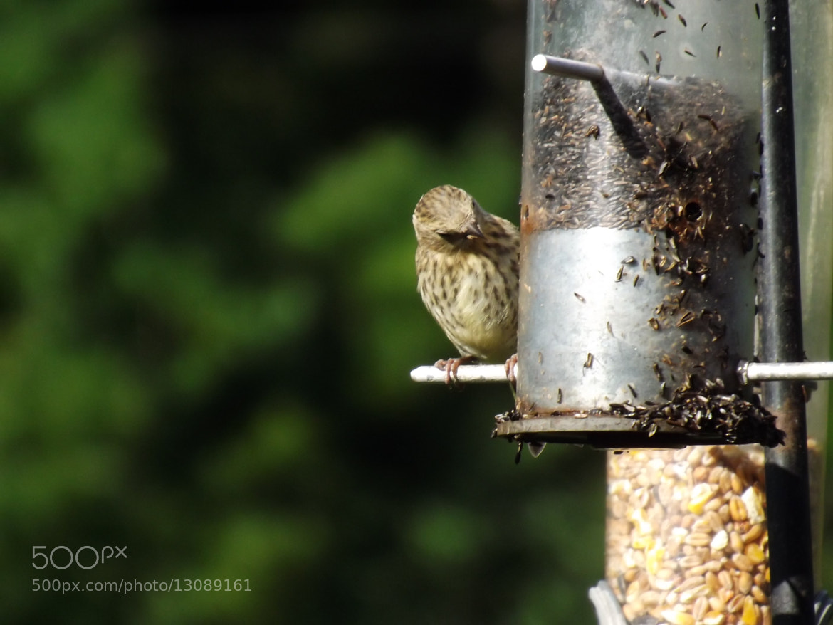 Photograph Bird eating from feeder by Max Rigden on 500px