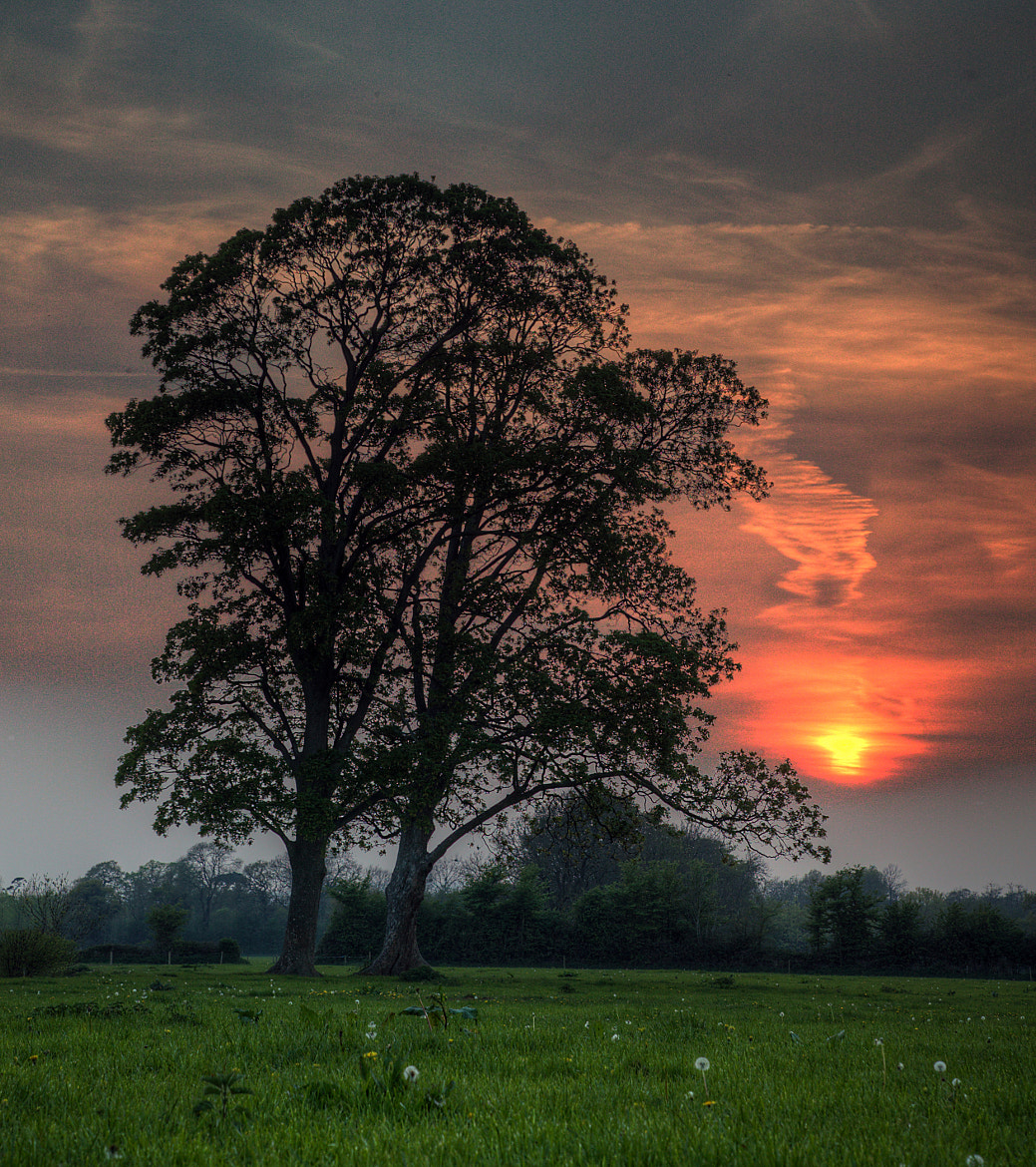 Photograph The Twins - Sunset by Sam  Catchesides on 500px