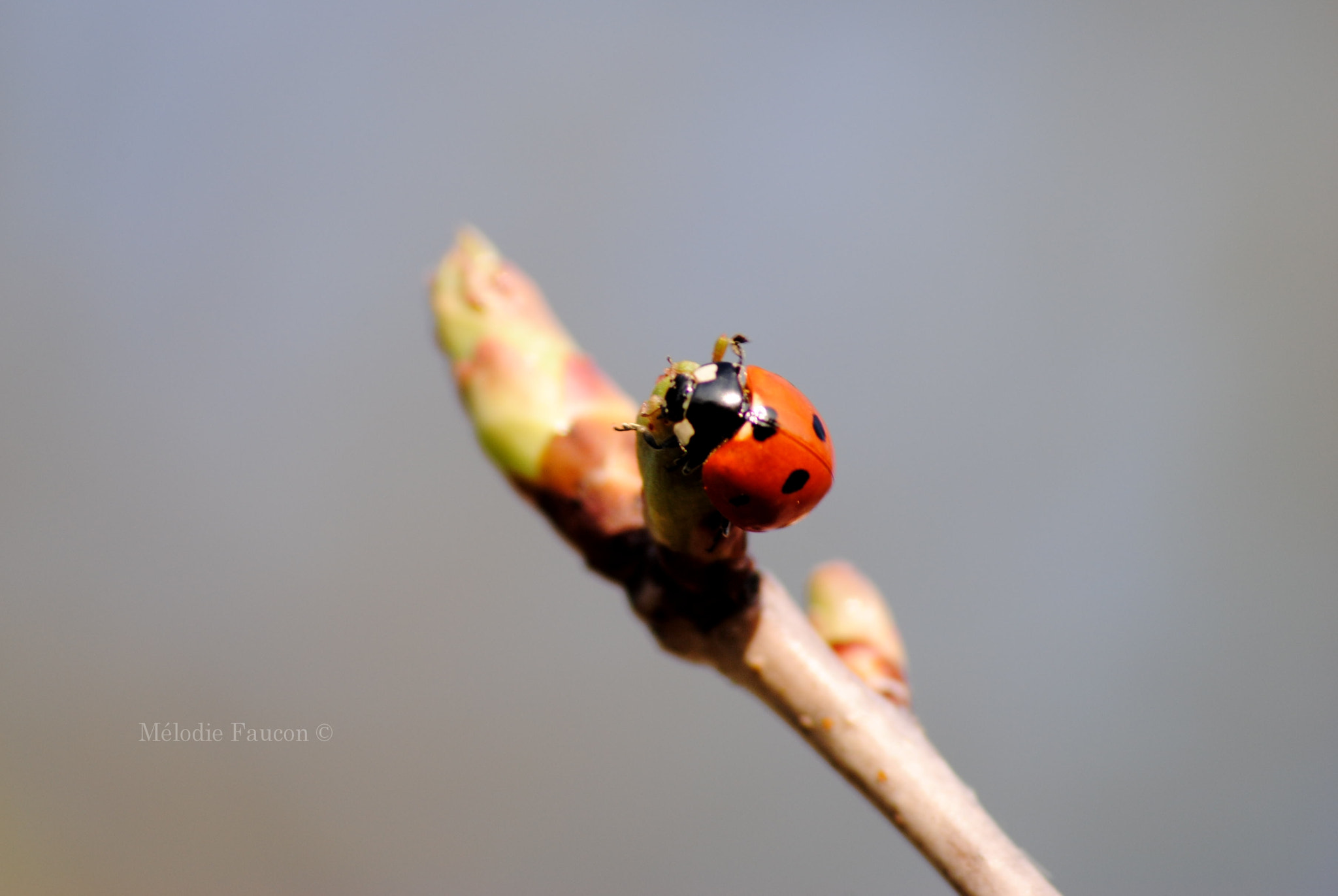 Photograph Coccinelle by Mélodie Faucon on 500px