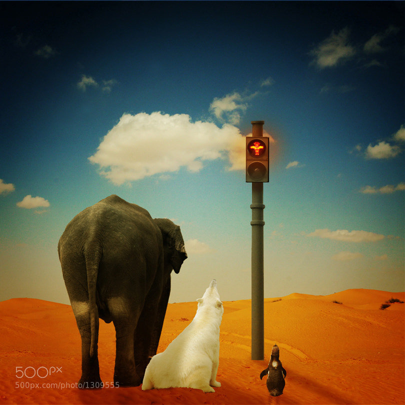 Photograph STOP! by Pixel Passion on 500px