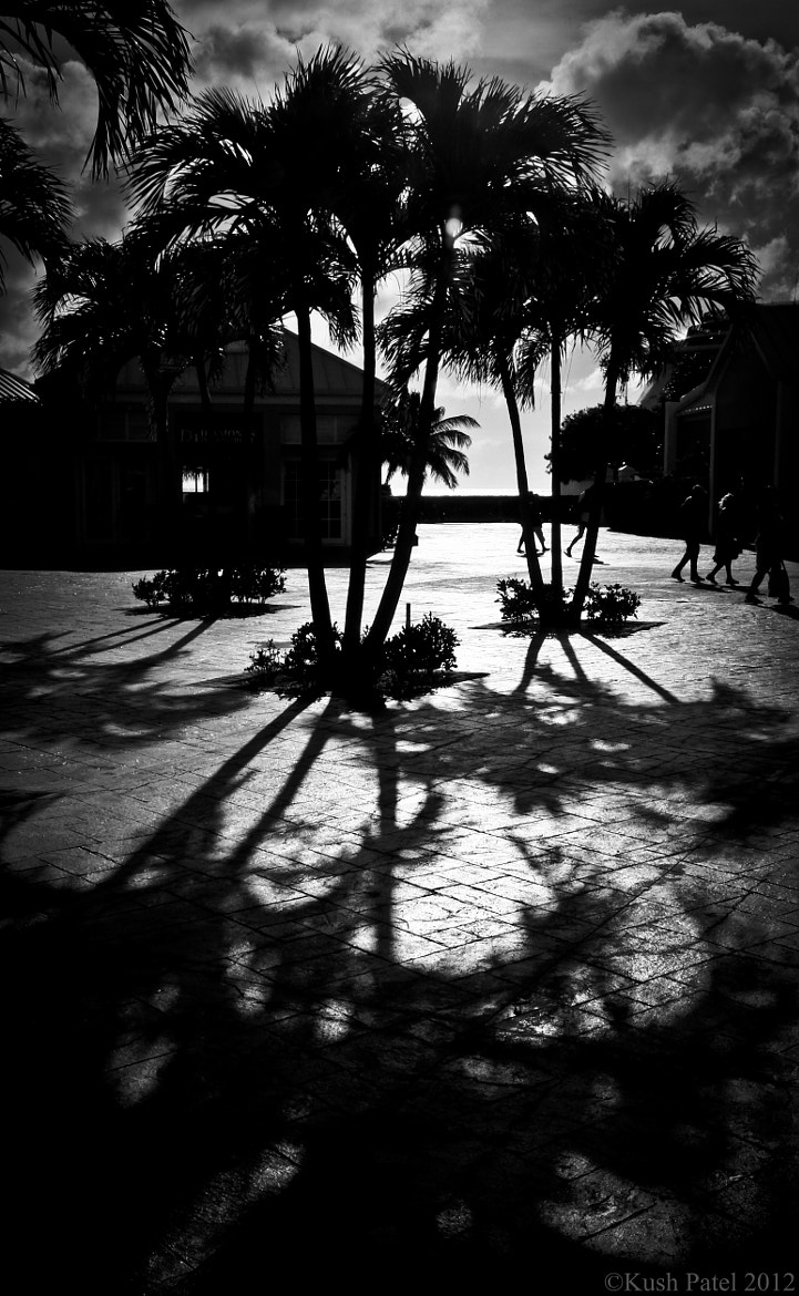 Photograph Tropical Shadows by Kashyap Patel on 500px