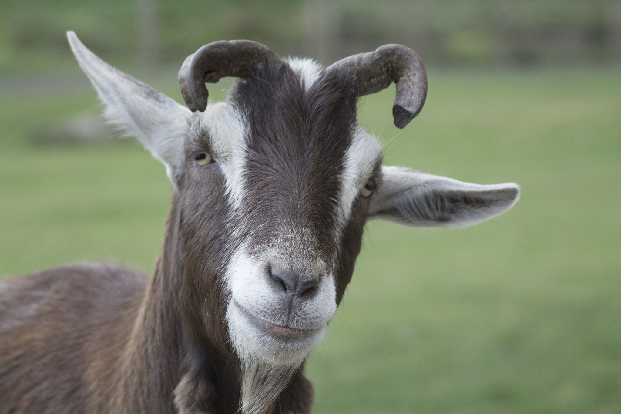 Photograph A Goat by Darren Smith on 500px