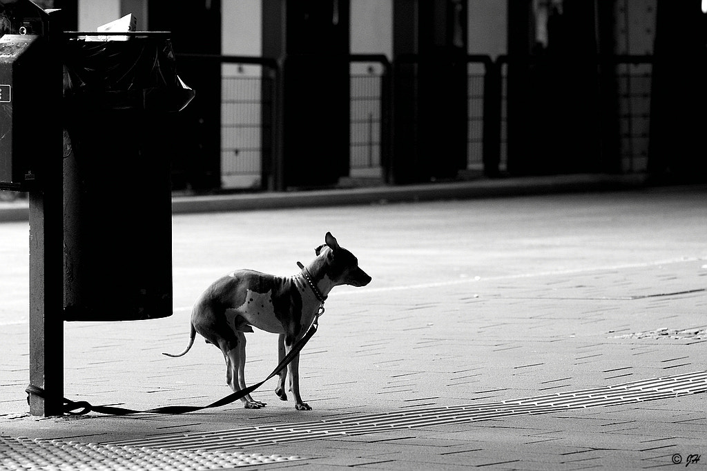 Photograph Dog by Jörg H. on 500px
