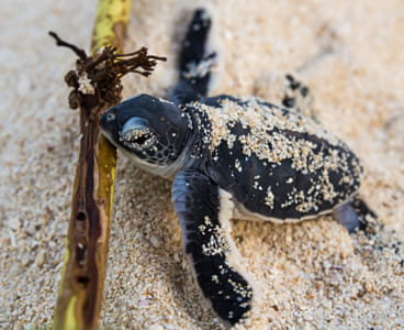 Baby Green turtle by Janet Weldon on 500px