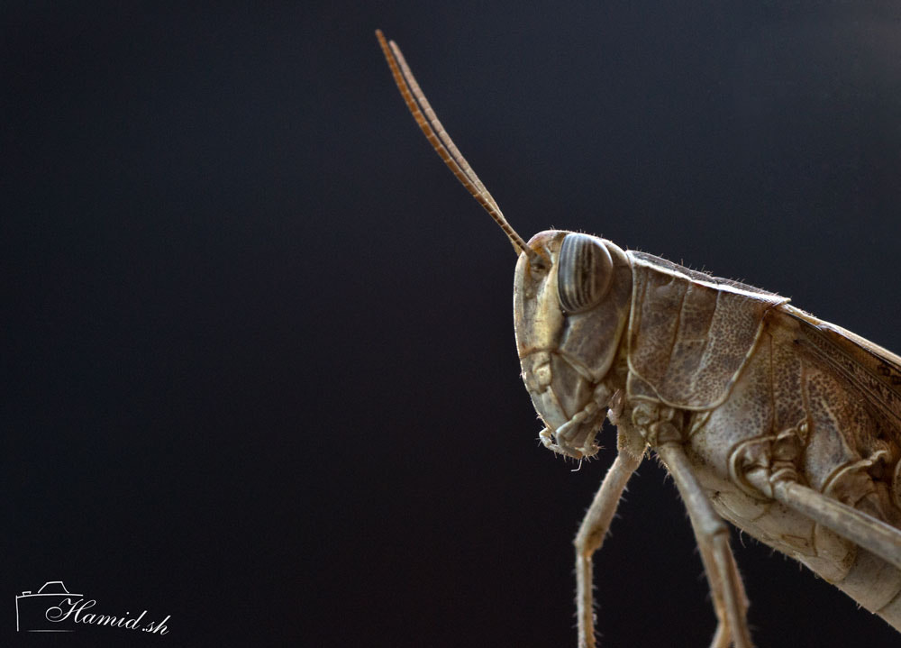 Photograph Grasshopper by Hamid Sharifi on 500px