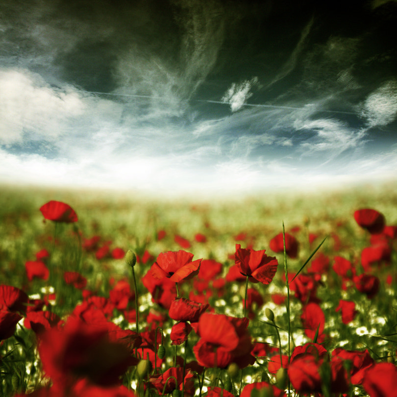 Photograph poppy dream by Pixel Passion on 500px