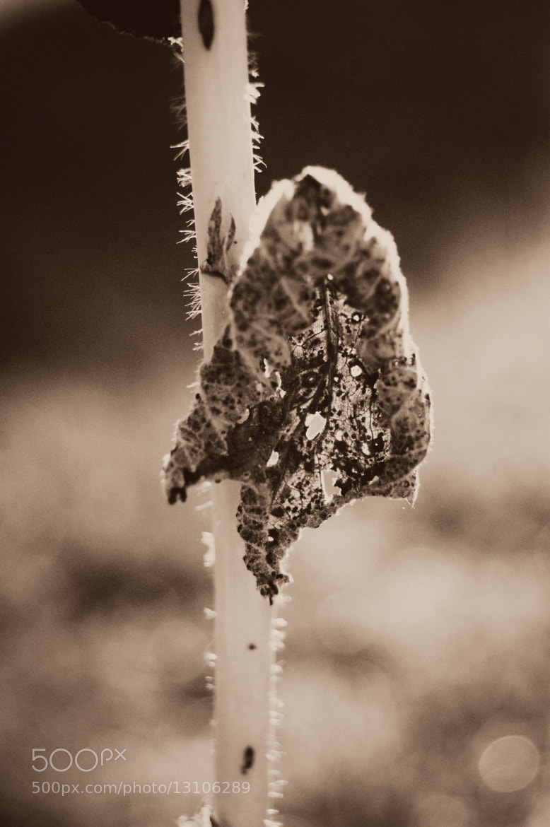 Photograph Withered. by Clautidia Waked on 500px
