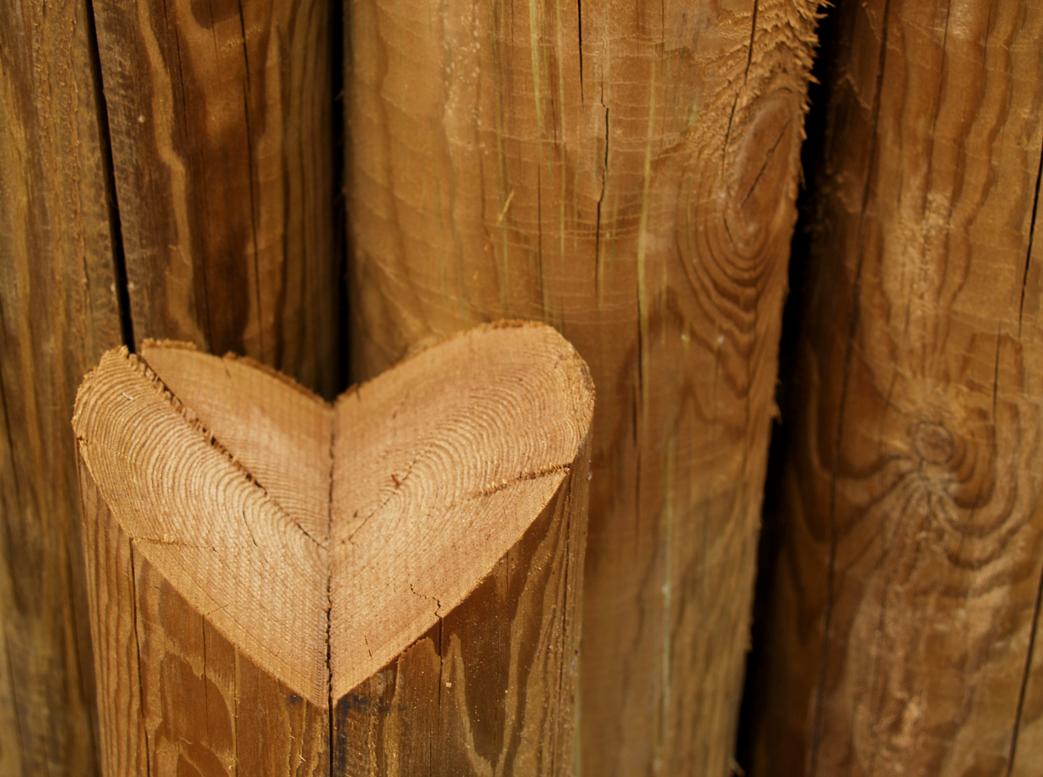 Photograph The Heart by Manolo Toledo on 500px