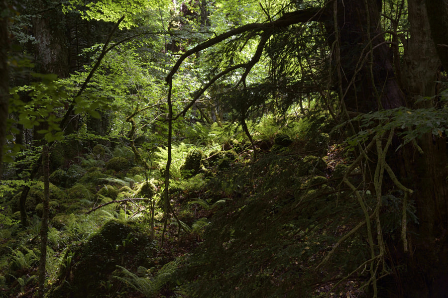 Mysterious forest / Foresta umbra (Italy)