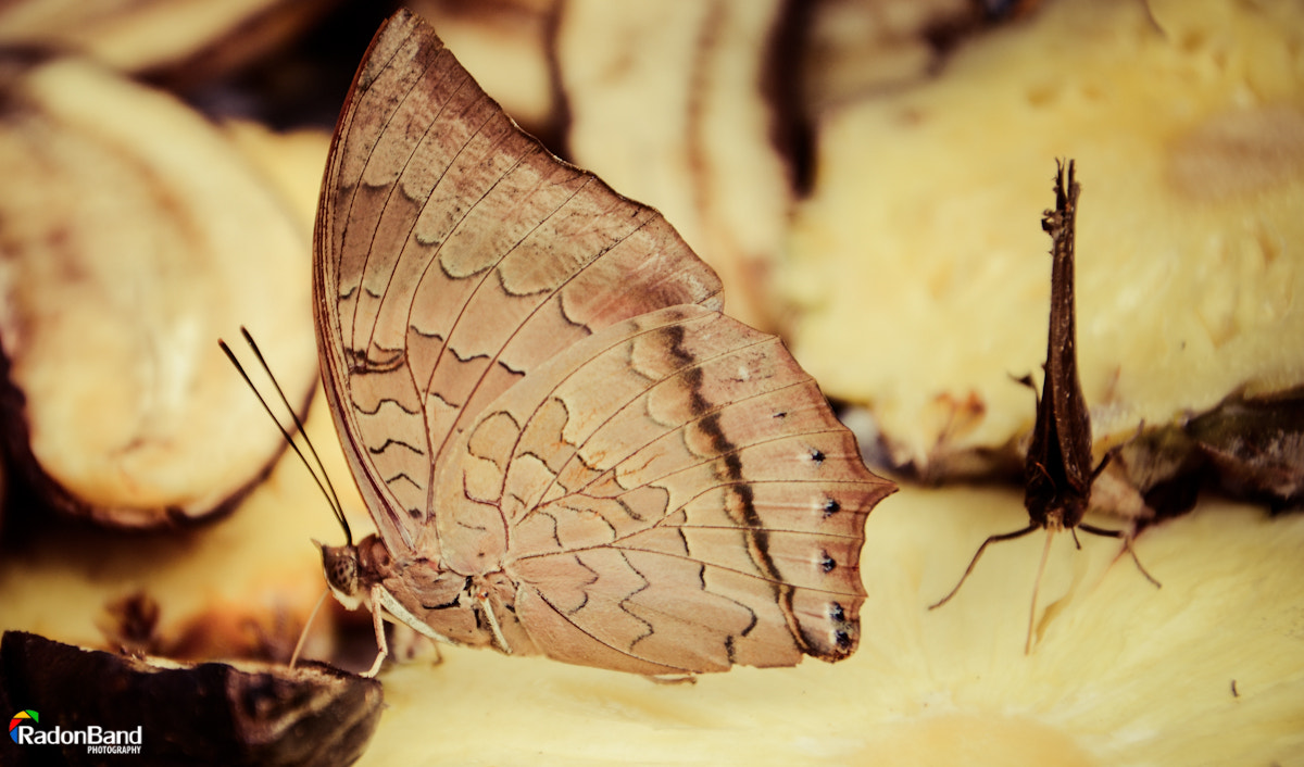 Photograph butterfly  by Sam Shah on 500px