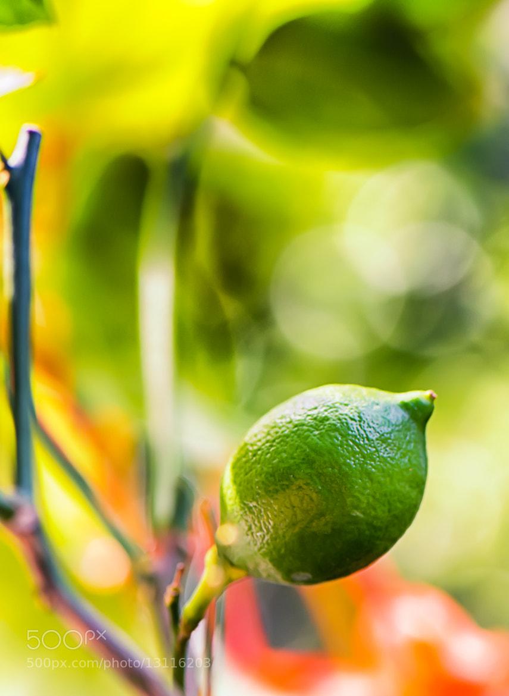 Photograph Lemon Culture by Leo Janssen on 500px