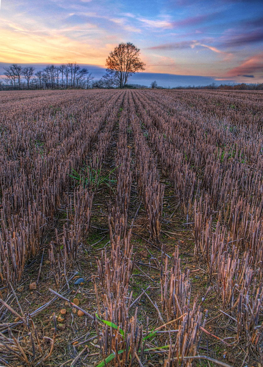 Photograph Harvested Crop by Matthew Chaplin on 500px