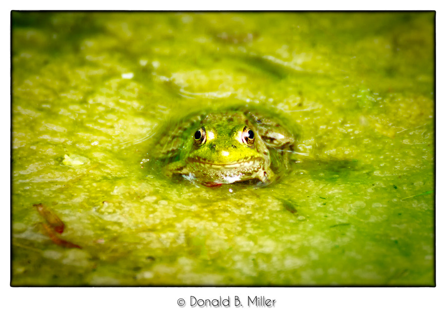 Photograph It's not easy being green... by Donald Miller on 500px