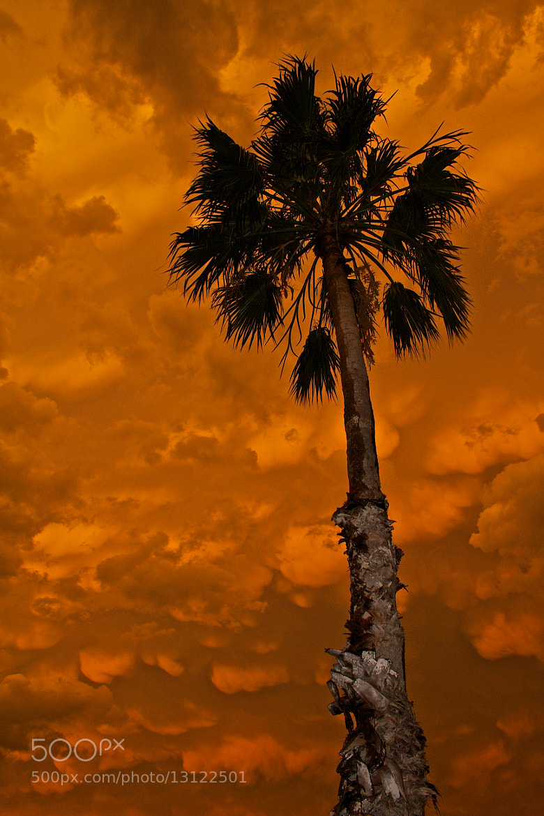 Photograph One Palm. by Carlos Nunez on 500px