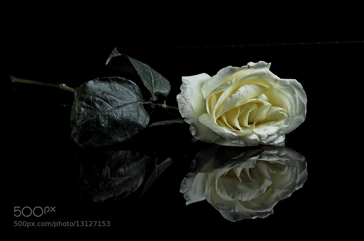 Photograph Old Rose Dying by Cristobal Garciaferro Rubio on 500px