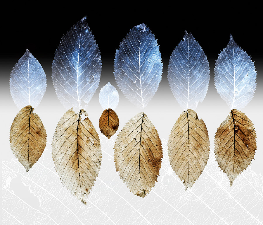 X-Ray leaves