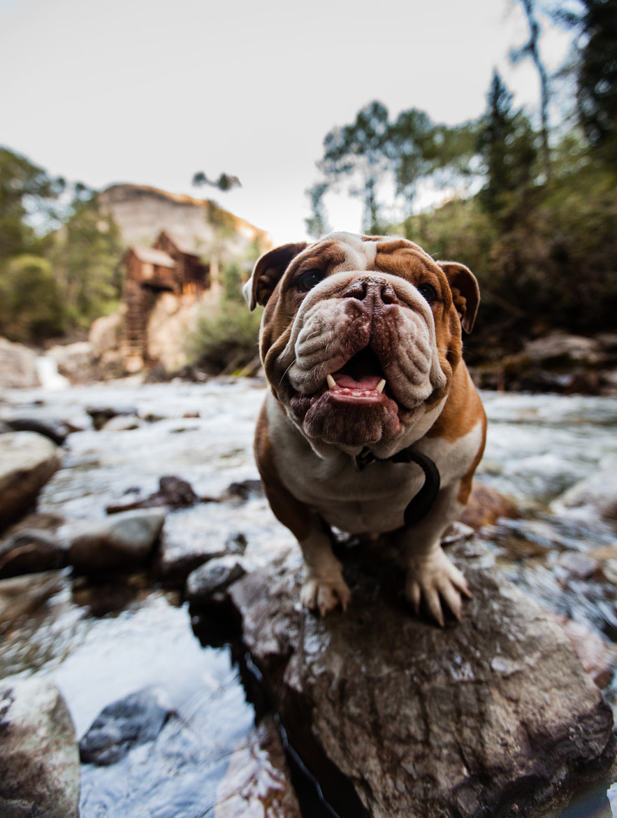 Photograph Crystal Mill With My Needy Bully by David Bouchat on 500px