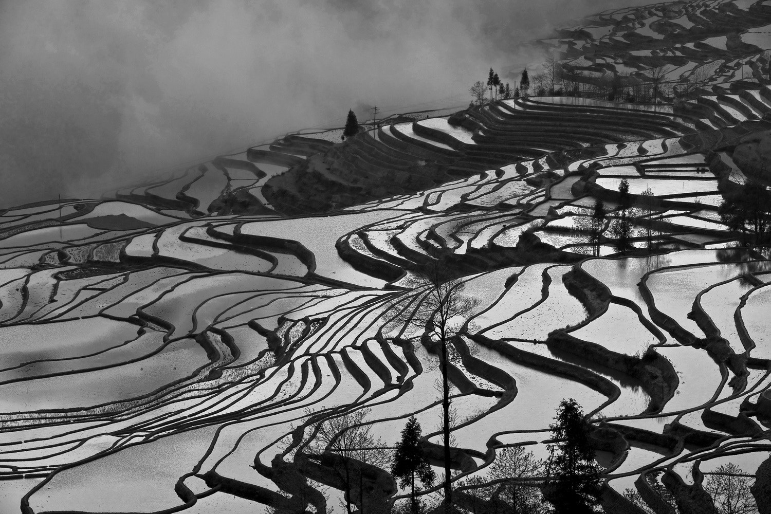 Photograph - - Rice Field - - by SIJANTO NATURE on 500px