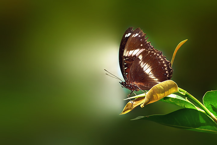 Photograph Ready to fly by Firman Afrianto on 500px