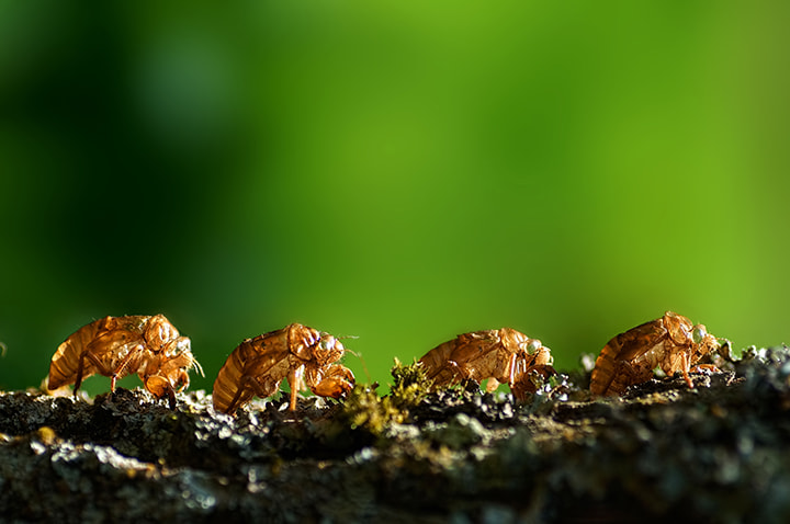 Photograph Die as a team by Firman Afrianto on 500px