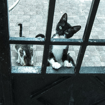 Cats of Greece, Fujifilm FinePix E500