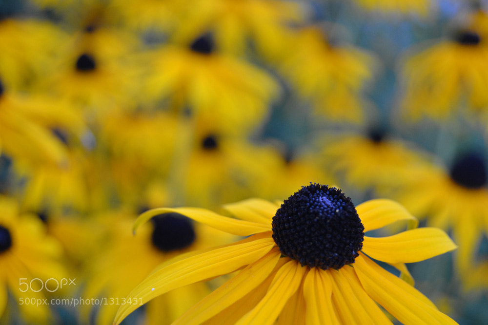Photograph Flower by Salmen Bejaoui on 500px