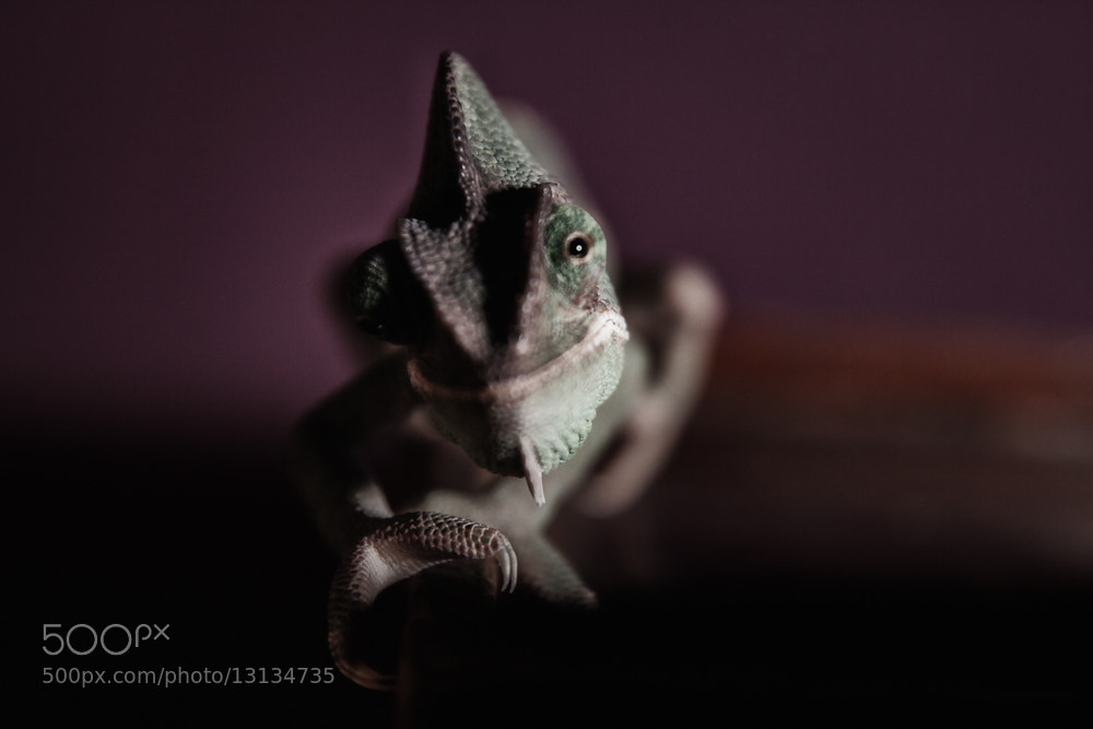 Photograph jar-jar the chameleon by Peter Politzer on 500px