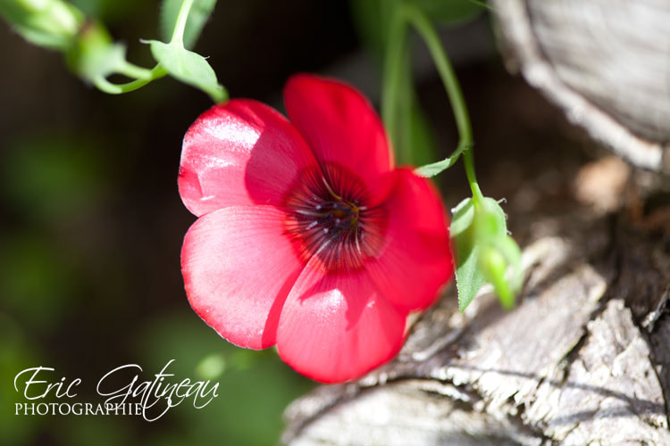Photograph In my garden 4 by Eric Gatineau on 500px