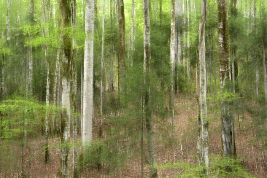 Forest impression / Montenegro