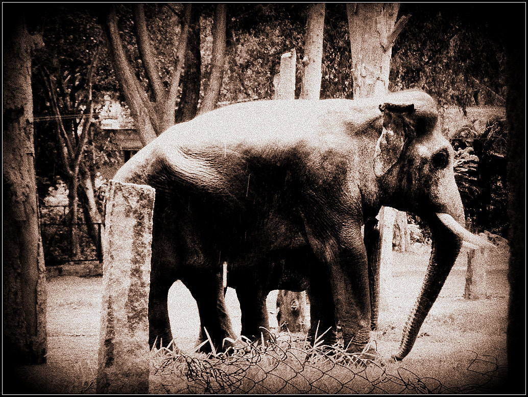 Photograph Tusker by Aukash Kumar on 500px