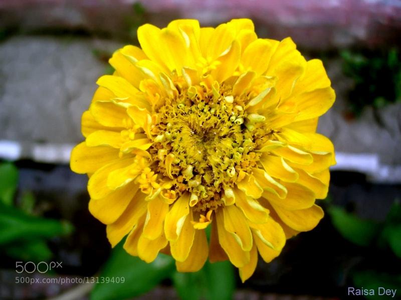 Photograph Flower by Raisa Dey on 500px