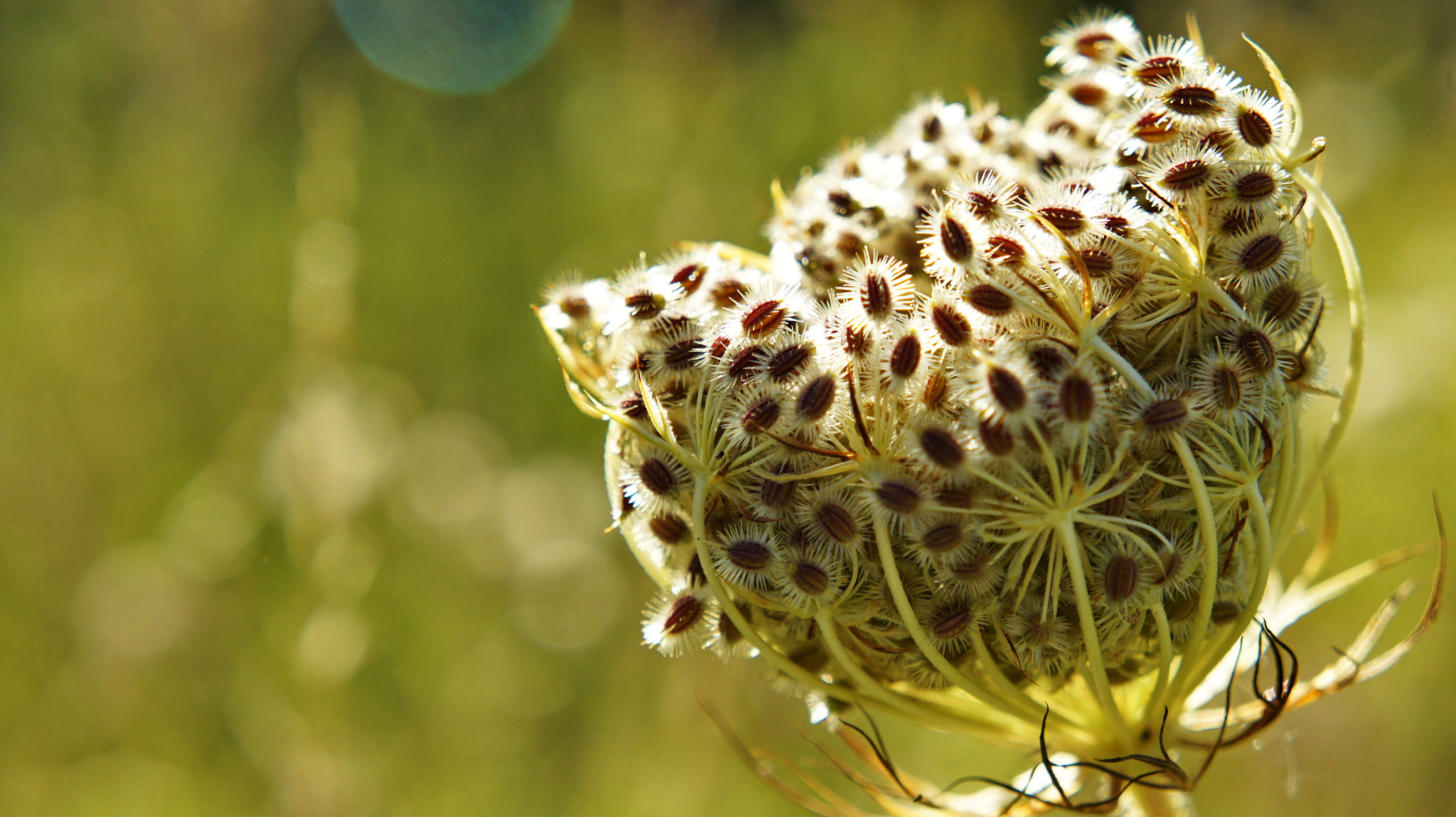 Photograph Plant by Hiwa  on 500px