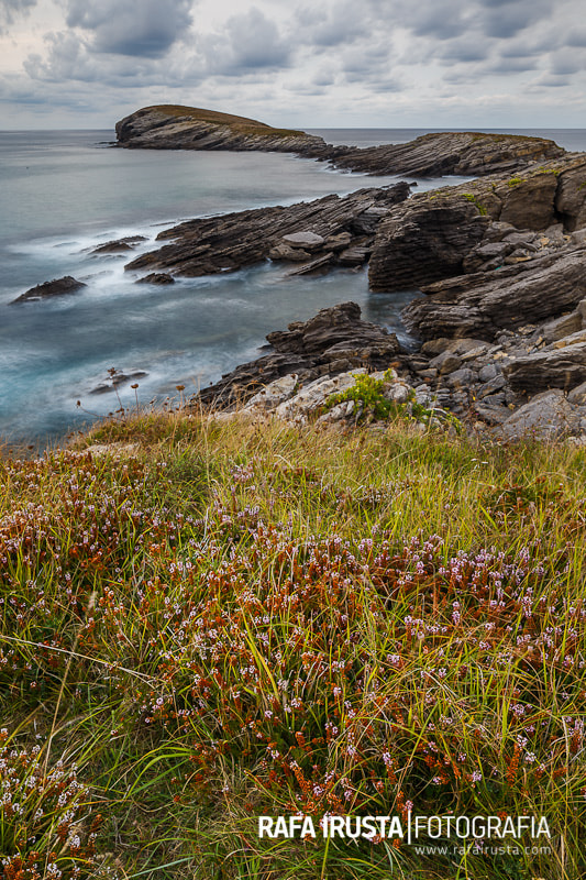 Photograph Heather in the foreground by Rafa Irusta on 500px