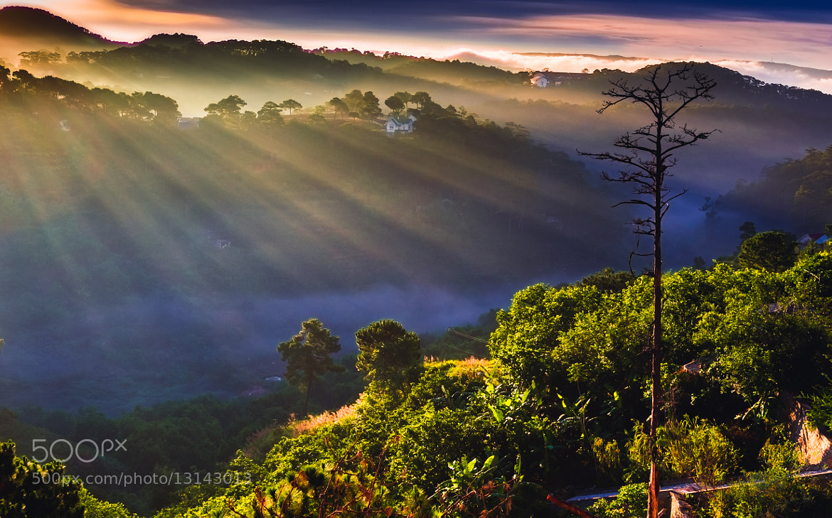 Photograph Light rays in fog  by love leica on 500px